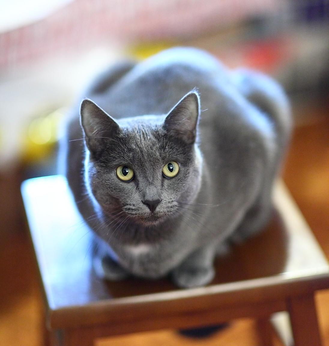 e-sexspiele blue cat schwetzingen