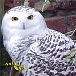 Hedwige et Harry Potter, ou comment cohabiter avec la chouette