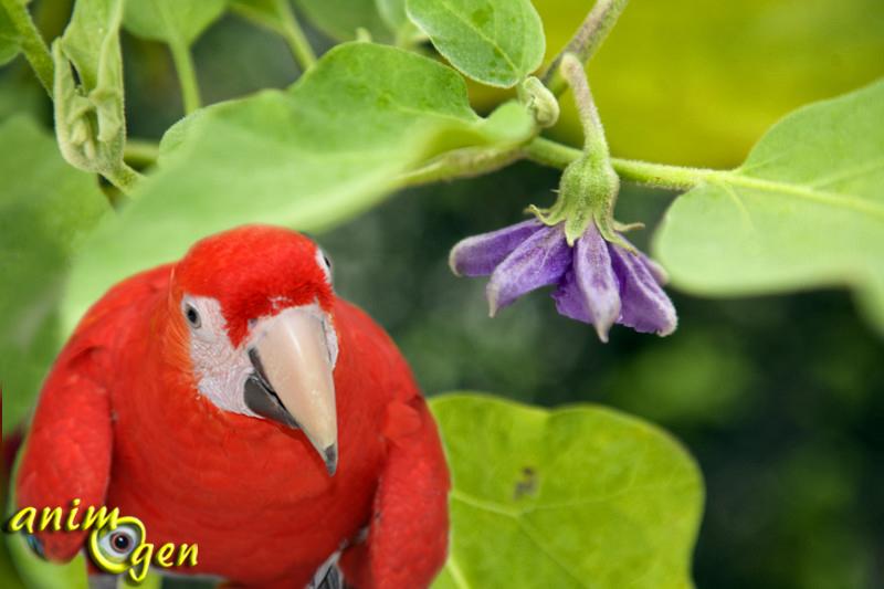 Alimentation et santé : nos perroquets peuvent-ils consommer des aubergines sans danger pour leur santé ?