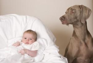 La préparation de la naissance d'un bébé avec un chien