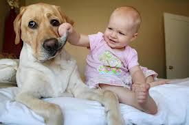 Enfants et chiens : comment éviter la mise en danger ?