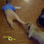 La mise en danger d'un bébé avec un chien par inconscience