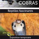 Exposition de reptiles « Cobras » à La-Chaux-de-Fonds (Suisse), du 20 juillet 2013 au 31 janvier 2014