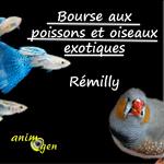 Bourse aux poissons et oiseaux exotiques à Rémilly (57), le dimanche 24 novembre 2013