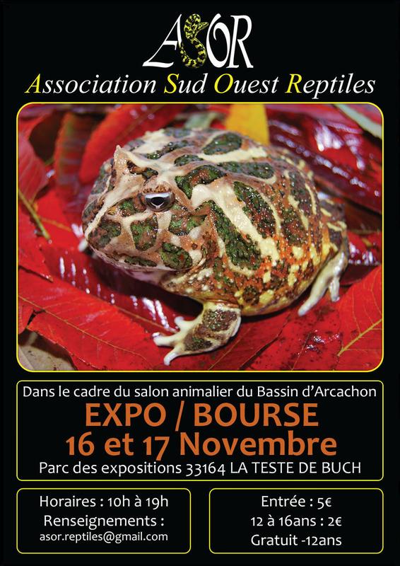 Exposition-Bourse aux reptiles à La Teste de Buch (33), du samedi 17 au dimanche 18 novembre 2013