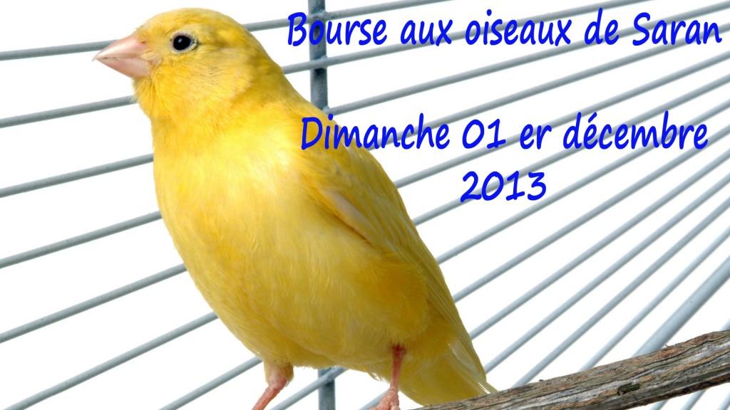 Bourse aux oiseaux à Saran (45), le dimanche 01 er décembre 2013