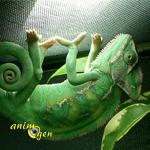 Généralités sur les caméléons : ce qu'il faut savoir avant de se lancer