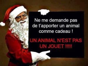 Les animaux ne sont pas des cadeaux