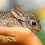 Rongeur ou lapin, quel animal de compagnie choisir ?