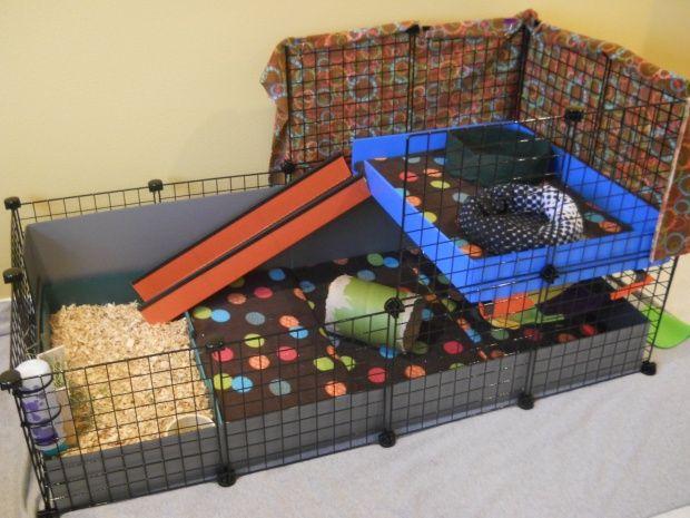 1000 id es sur le th me jouets pour cochons d 39 inde sur. Black Bedroom Furniture Sets. Home Design Ideas