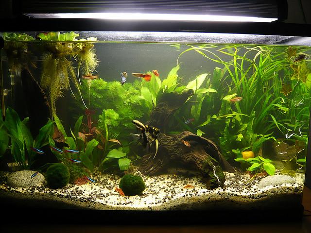 trois poissons pour d 233 buter avec un aquarium d eau douce guppy xipho platy animogen