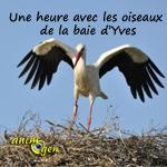 Sortie en plein air « Une heure avec les oiseaux de la baie d'Yves » à Yves (17), les mardi 05, mercredi 06 et dimanche 10 novembre 2013