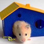 Vous allez adopter un hamster : cage, gamelles, jouets, litière, les accessoires indispensables