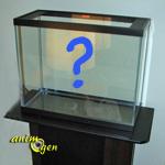 Débuter avec un aquarium d'eau douce : ce qu'il faut savoir