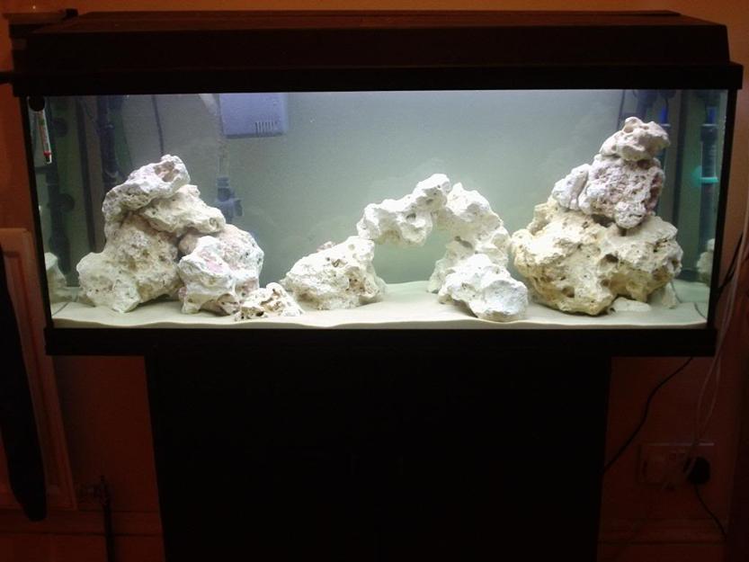 d 233 buter avec un aquarium d eau douce installation et mise en route du bac animogen