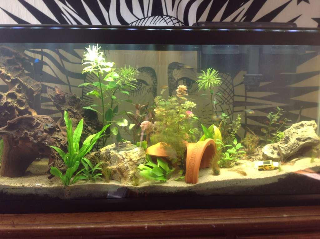 aquarium eau douce substrat