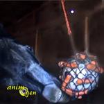 Fabriquez un ballon de foraging pour vos chevaux, ânes et poneys