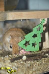 Fabriquez un sapin de Noël en balsa et liège pour vos rongeurs, lapins et perroquets
