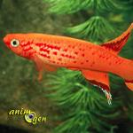Les Killies, une famille de poissons aussi variée que riche en couleurs