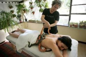 Le massage par les reptiles, une thérapie à sang froid