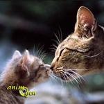 Comportement : pourquoi les chats se touchent-ils le nez ?