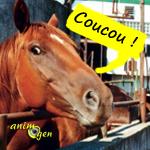 Devenir propriétaire d'un cheval, une décision à ne pas prendre à la légère