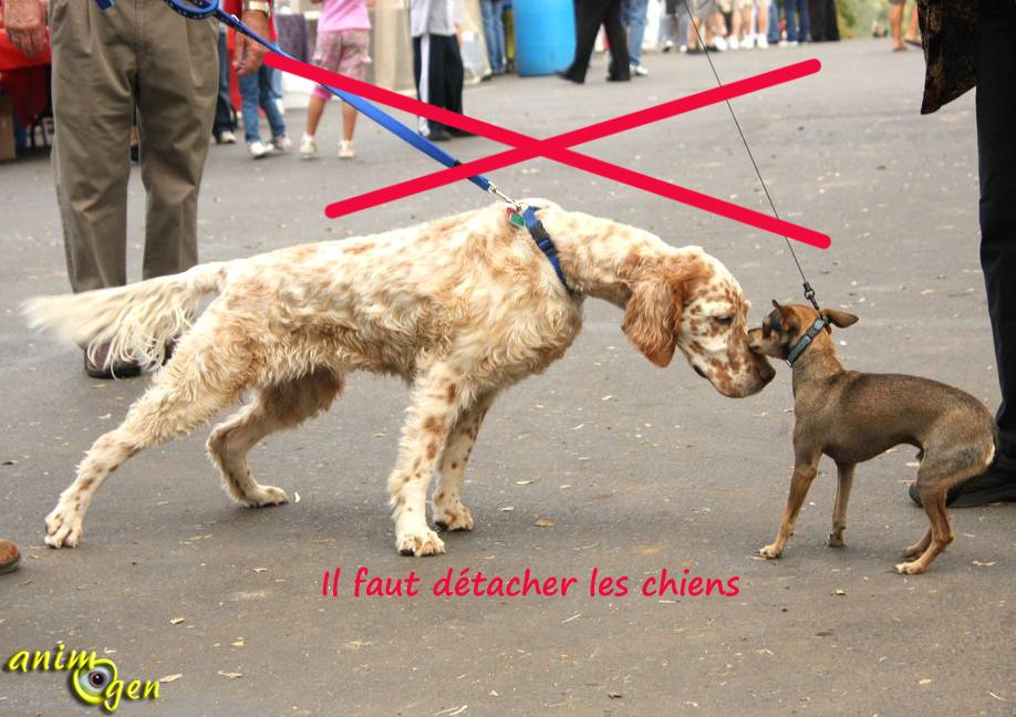 rencontre entre chien et chiot