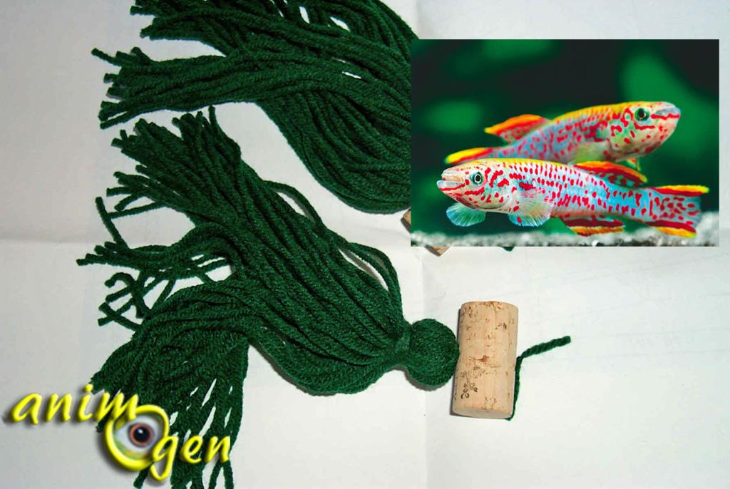 Reproduction : fabriquez un mop pour accueillir les oeufs de Killies
