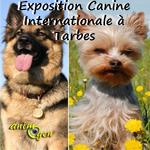 75 ème Exposition Canine Internationale à Tarbes (65), le dimanche 17 novembre 2013