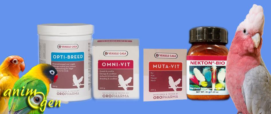 L'importance des protéines dans l'alimentation de nos perroquets (lysine et méthionine)