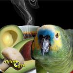 Alimentation et santé : liste des aliments toxiques pour les perroquets