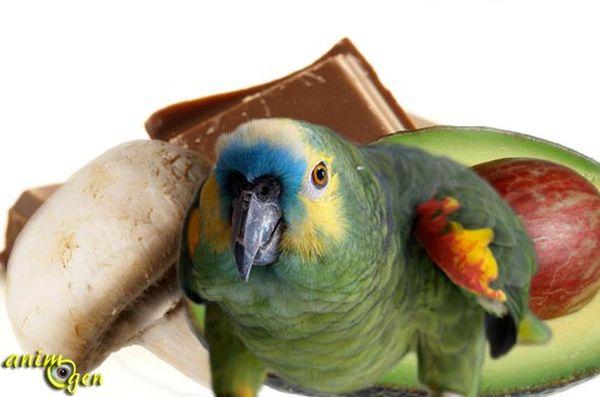 alimentation et sant liste des aliments toxiques pour les perroquets animogen. Black Bedroom Furniture Sets. Home Design Ideas