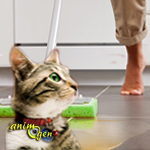 Education, comportement : comment empêcher un chat d'uriner là où il ne faut pas ?