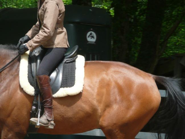 Equitation : les aides naturelles du cavalier