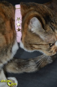 Collier pour chat en cuir anti-étranglement (Bobby)