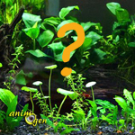 Comment choisir les plantes d'un aquarium d'eau douce ?