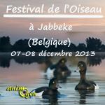 Festival de l'Oiseau à Jabbeke (Belgique), du samedi 07 au dimanche 08 décembre 2013