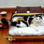 Education et comportement : comment empêcher nos chats de nous réveiller la nuit ?