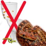 Santé : la constipation chez les serpents (causes, symptômes, traitement)