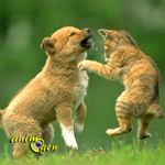 Comportement : chiens et chats peuvent-ils vivre ensemble ?
