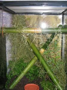 Les exigences des geckos diurnes du genre Phelsuma : maintien et alimentation