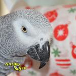 Jouet détourné pour perroquet, rongeur et lapin : le rouleau de papier de Noël