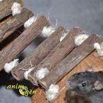 Jeux et cabanes pour rongeurs : noix de coco avec ponts suspendus (Europet Bernina)