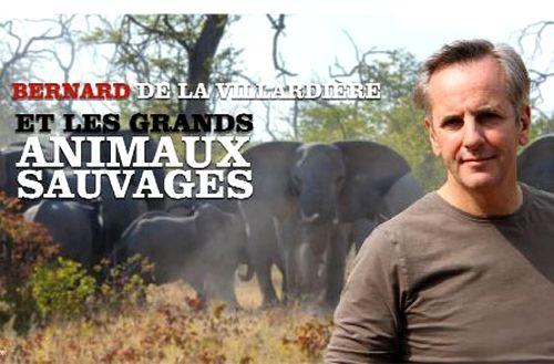 """""""Les grands animaux sauvages"""", une émission consacrée aux animaux sauvages sur M6 en décembre 2013"""