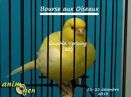 Bourse aux oiseaux à Gauchin Verloing (62), du samedi 21 au dimanche 22 décembre 2013