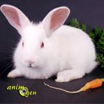 Les lapins sont-ils des gastronomes à grandes oreilles ?