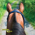 """Education : peut-on entraîner un """"vieux"""" cheval ?"""