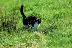 L'adolescence chez le chat : chronique d'un drame programmé