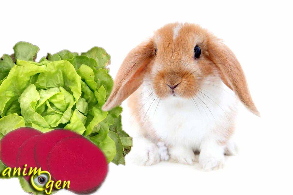 Quels aliments frais sont toxiques pour les lapins ? (liste)