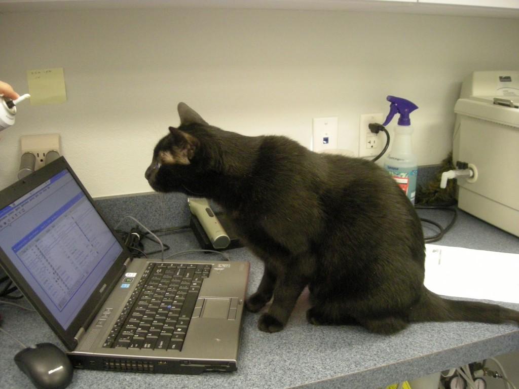 Education et comportement : comment les chats apprennent-ils ?